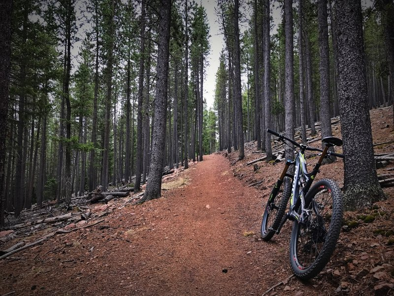 The Staunton Ranch Trail traverses beautiful coniferous forests on a buffed tread.
