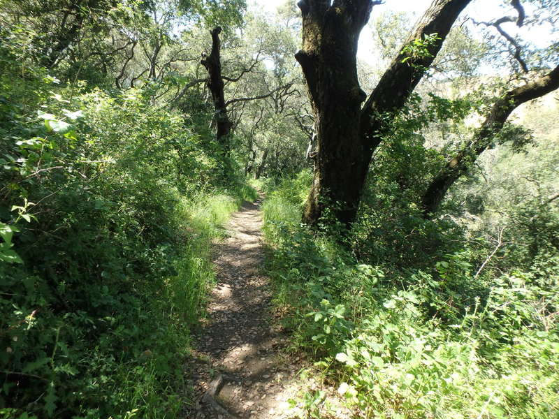 On the Bay Leaf Trail. It looks great and easy until you hit the switchbacks.
