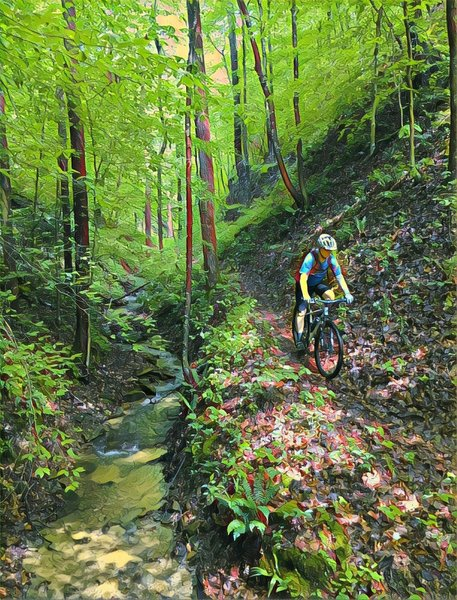 Descending into Cave Run brings plenty of leaves and gorgeous surroundings.
