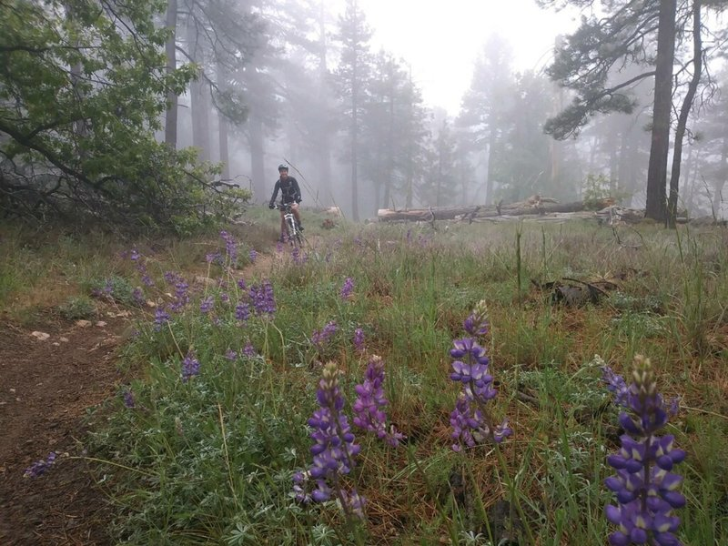 Flowers and a covering of fog during a spring ride on the Gatos Spur.