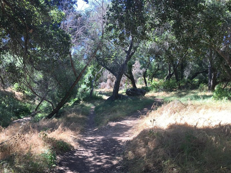 Some shade along the creek where the trail narrows and becomes a lot of fun!
