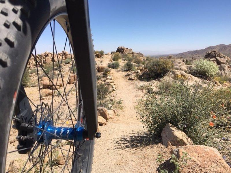 Enjoying the wildflowers on some great desert singletrack.