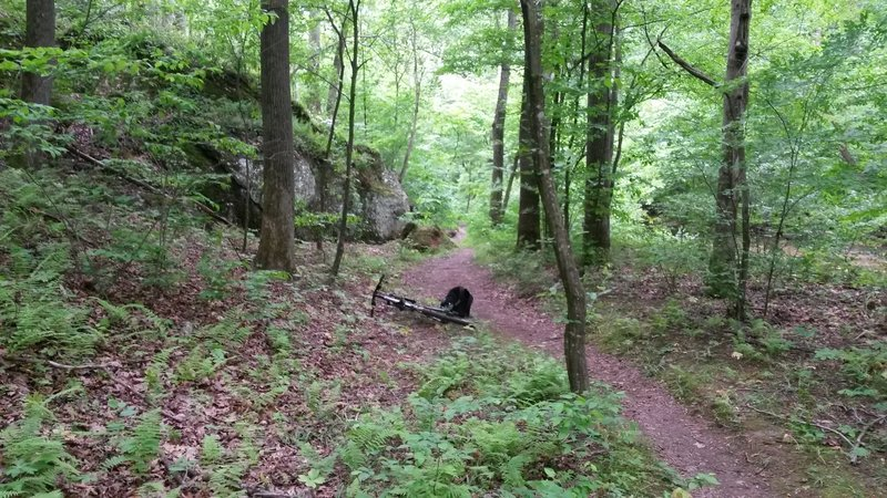 A nice section trail free from any hampering brush.