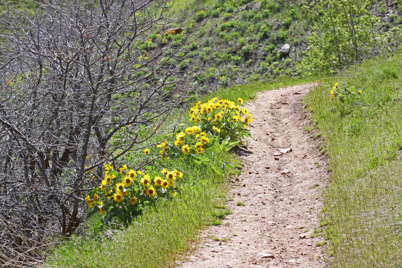 A singletrack sample of the Red Butte North Trail on Mt. Van Cott.
