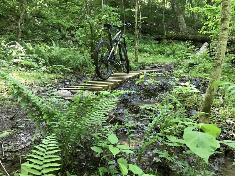 Immersed in the natural beauty of the Lodge View trail.