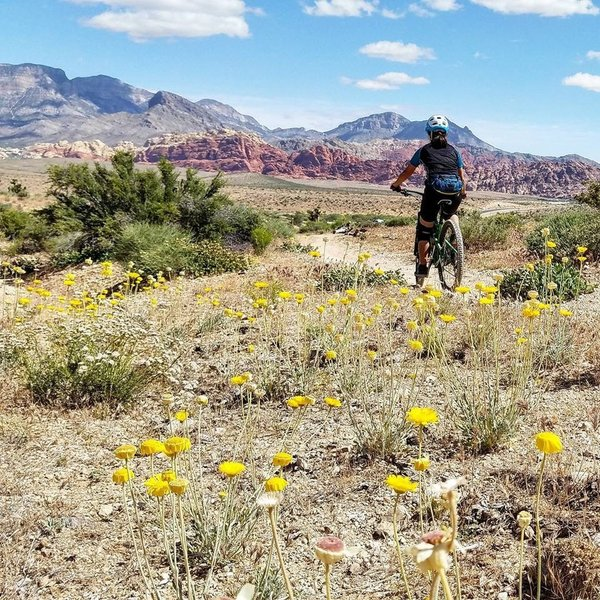 Spring riding in the desert along the Bunny Trail.