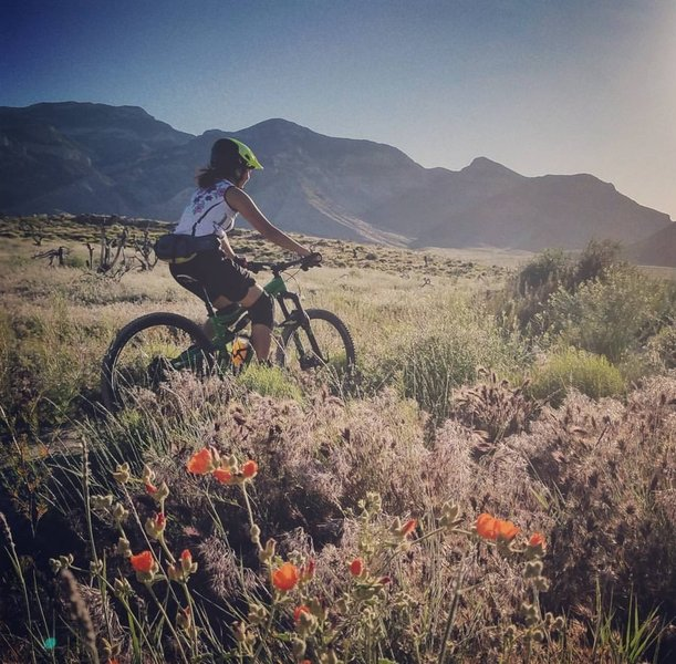 Spring in the desert, 2017. Riding the Badger Pass trail.