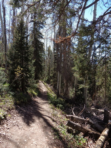 Finding some forest flow on the Meadows Trail.