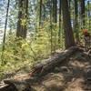 Rock Steeps on Hidden Trail.