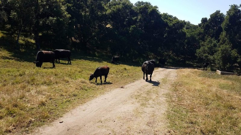 Some locals on the Ollason Trail. This was before it really started getting tough.