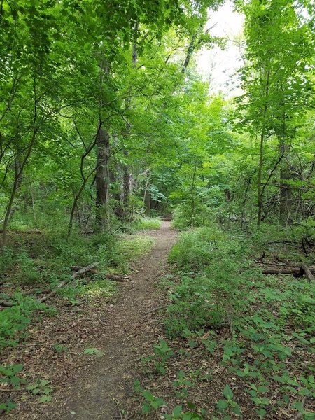 The main trail trail by the Edgely Ultimate Fields.