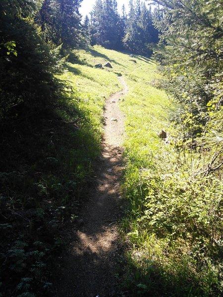 A short climb through a clearing on Surveyor's Ridge Trail.