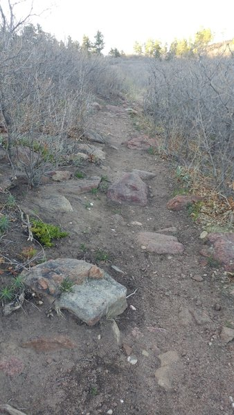 Nearly the entire section next to Mt Herman road is made up of of rocky singletrack.