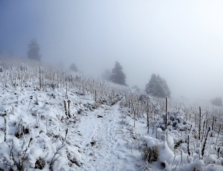 A shroud of fog sits over the Parmalee Trail during winter.