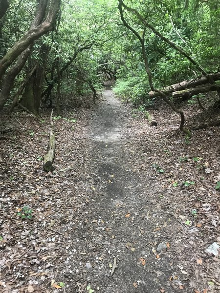 One of the smooth sections along the Daniel Ridge Trail.