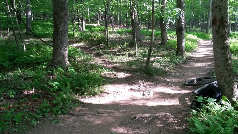 A split from the main trail to a nearby branch.