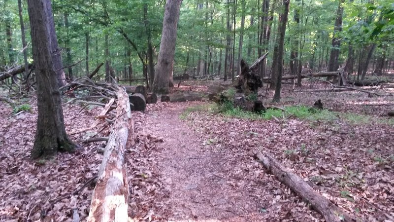 A log-lined section of trail at Great Seneca Stream Valley Park.