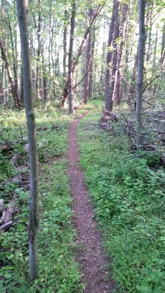 A clearly defined ribbon of singletrack on the west side of the park.