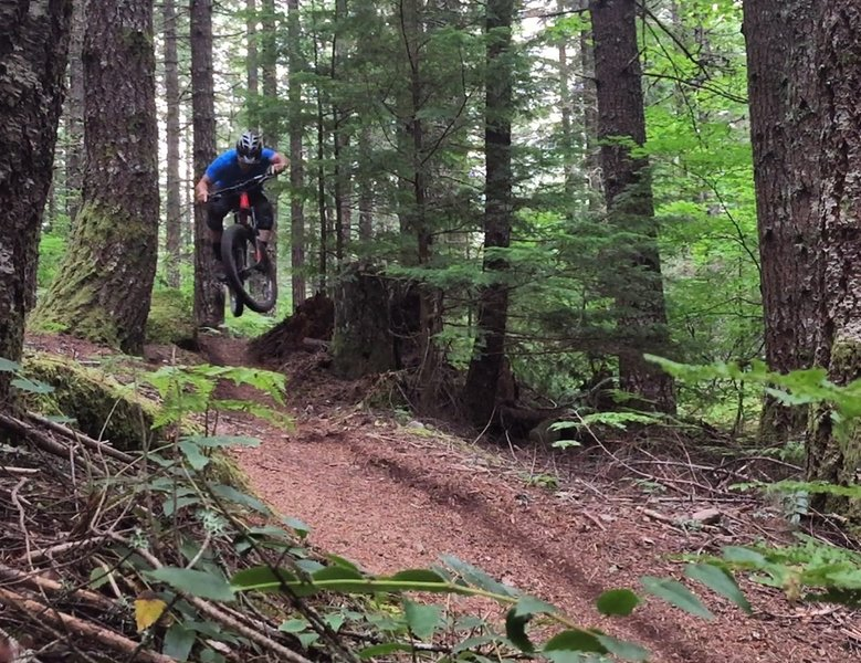 Lower Timberline opens up for some speedy sections.