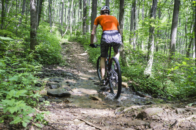 Flat Creek Loop offers a number of opportunities to get your tires wet.