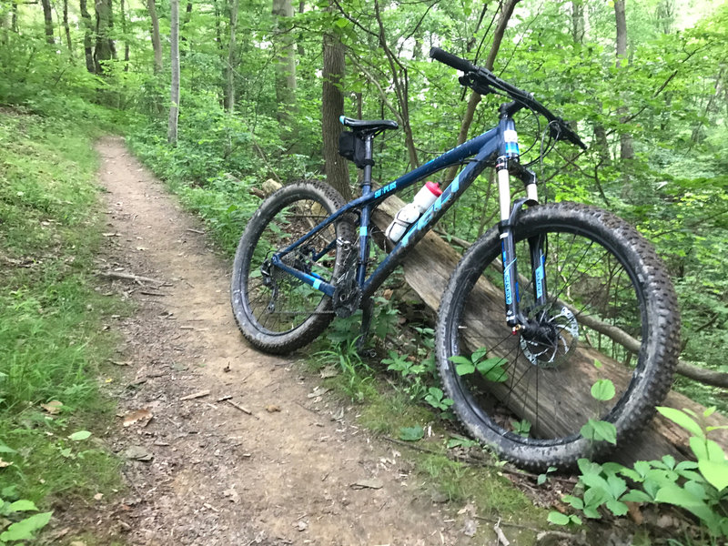 Smooth singletrack near the end of Chestnut Path.