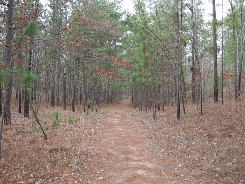 Mountain Bike Trails near Kisatchie National Forest on