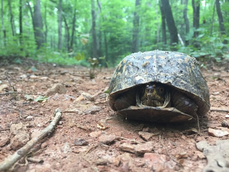 Watch Out for these guys! They love the trail too!