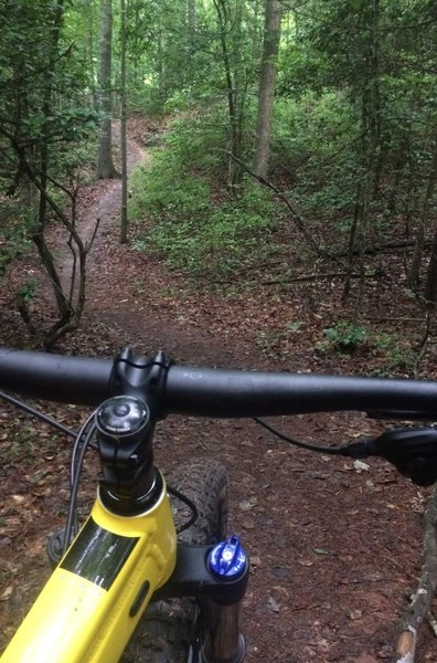 Part of the middle section of the Hickory City Park singletrack.