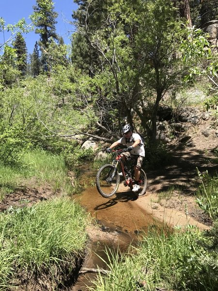 Cannell creek was still flowing in June, we even spotted a little trout up there.