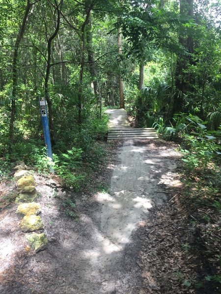 A short rowdy section of trail greets riders ahead.