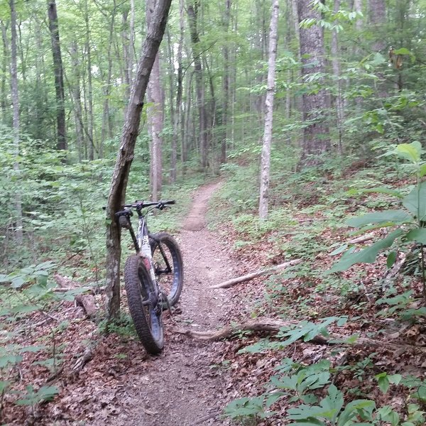 A nice pice of smooth singletrack through a beautiful forest.