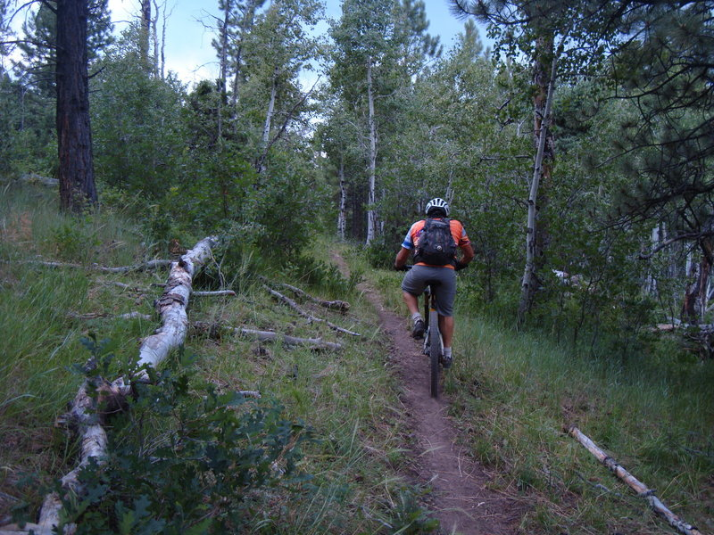 Climbing up the Thunder Loop #596 on a narrow section of singletrack.