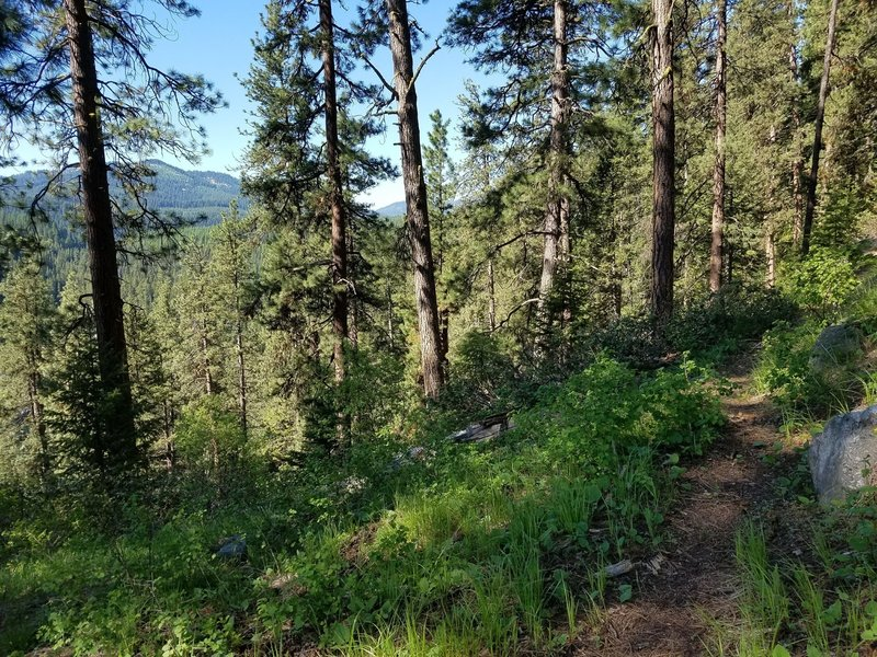 The Cow Camp Trail is often narrows and sometimes encroached on by brush and plants.