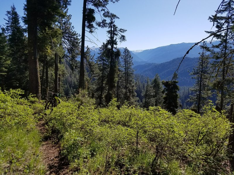 Views from the Cow Camp Trail.