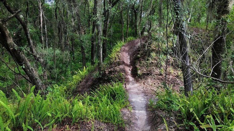 Narrow exposed singletrack lined by ferns makes for a fun option.
