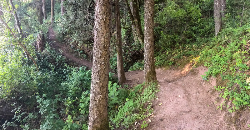 The North Shore Trail follows constantly rolling terrain and rarely stays flat.