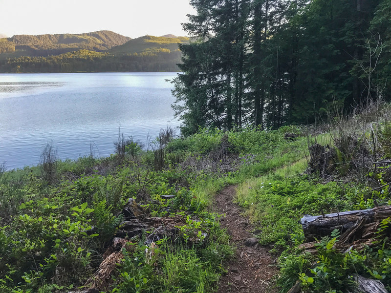 Several times the trail emerges from the forest, offering nice views of Lookout Point reservoir.