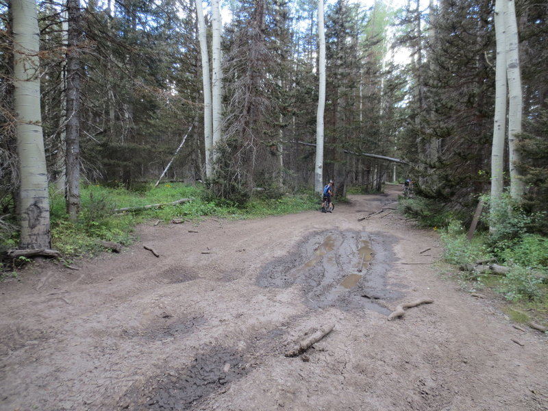 There are still plenty of mud holes to contend with in the middle of summer!