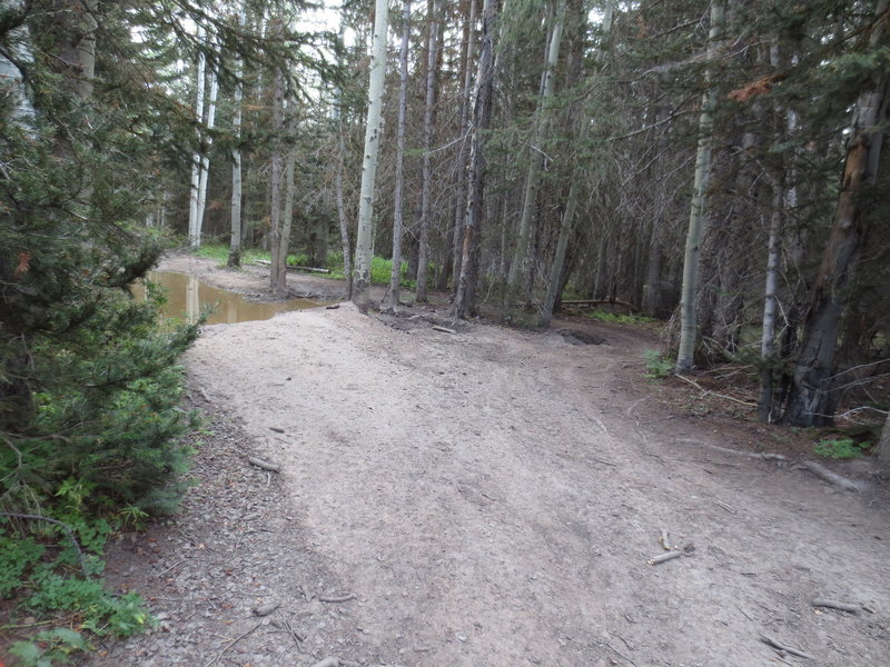 More mud holes. This ones too deep to go through. Most of the trail is pretty dry except for a few spots like this.