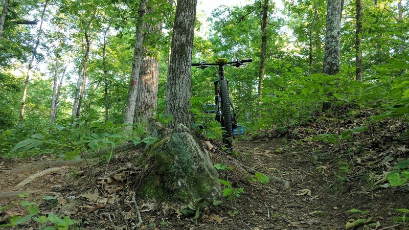 Narrow singletrack and occasional roots make for a great ride on the Red Loop.