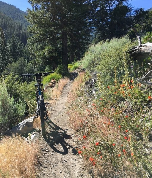 Climbing up through the forest on the Sierra Canyon Trail. If you time it right, you might find some blooms.