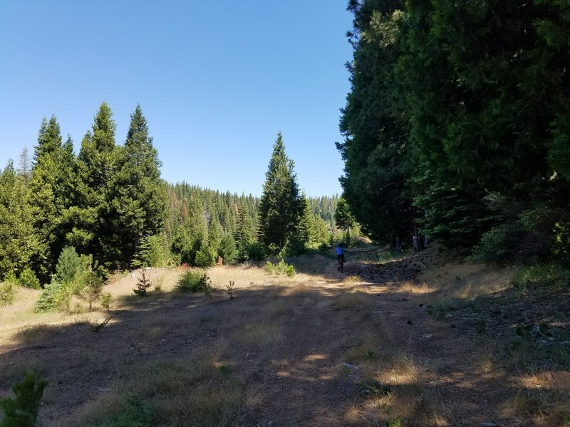 At around 1.9 miles the trail opens up into a meadow. Which makes a  good place for a snack.