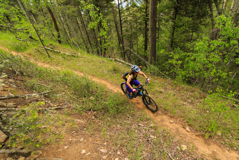 Shari Heier riding in the forest along the Elliot Barker trail. The historic mining roads provide a perfect route for modern mountain biking trails.