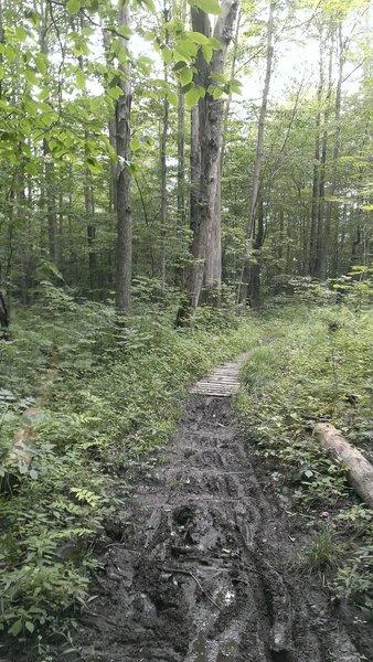 Some early season mud tracks on Bulls Dam.