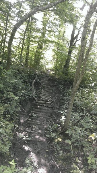 A muddy section of steps.