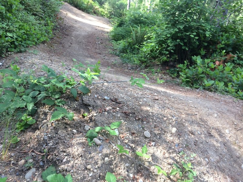 A dedicated group of trailbuilders has clearly put a lot of love into building these beautifully sculpted trails.