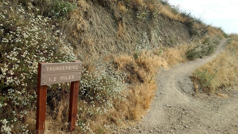 The upper entrance to Thunderbird Trail (where it connects to Crafton Hills Ridge Trail)