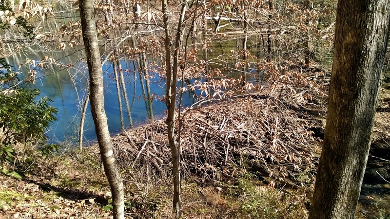 A huge beaver dam, holding back a ton of water.