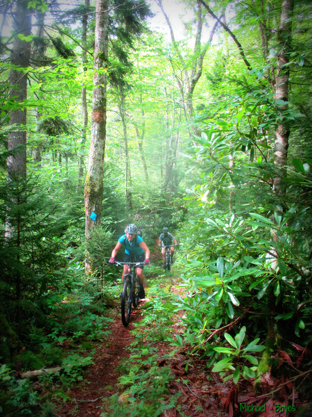 One of the Rhodo sections on the PocaFork ride. Photo by Mike Boyes.