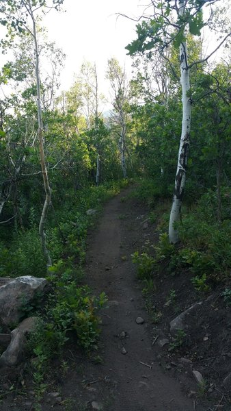 Enjoying the singletrack up in the Aspens at High Star Ranch.